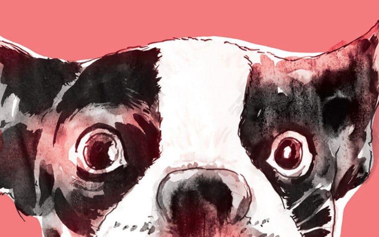 bulldogma-a