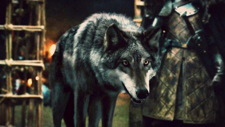 Game of Thrones lobos
